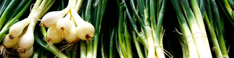 Dieta de la cebolla