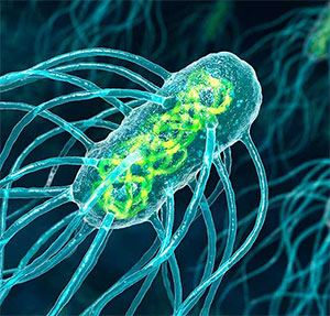 Bacteria de Salmonella typhi
