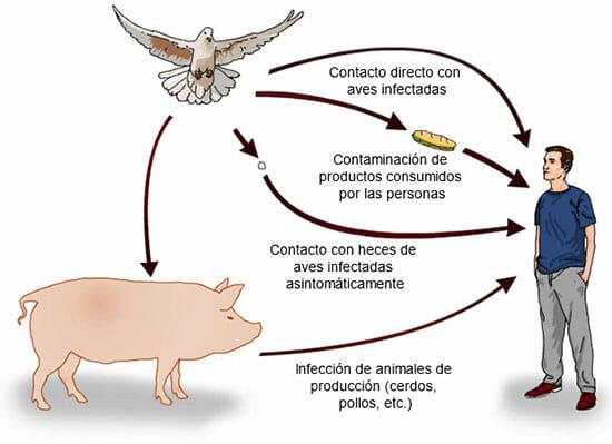 Formas de contagio de la salmonelosis