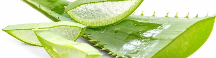 Aloe vera, propiedades antiinflamatorias y analgésicas