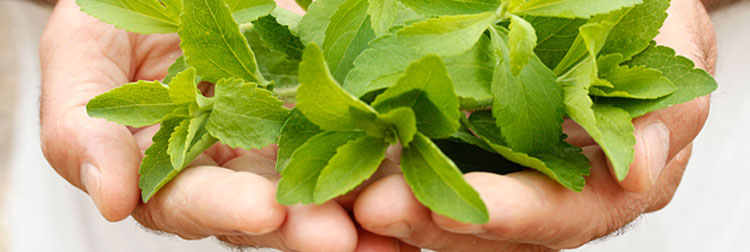Stevia: un endulzante alternativo