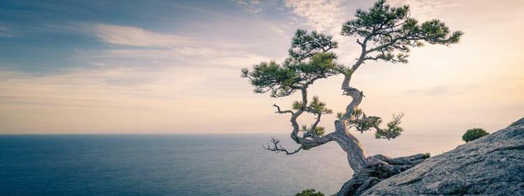 Mindfulness: qué es y qué beneficios aporta