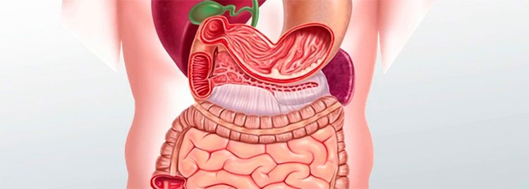 Causas del corte de digestión