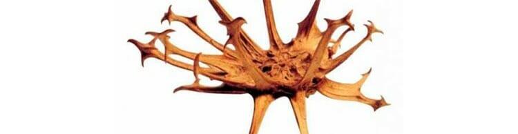 La garra del diablo, potente antiinflamatorio