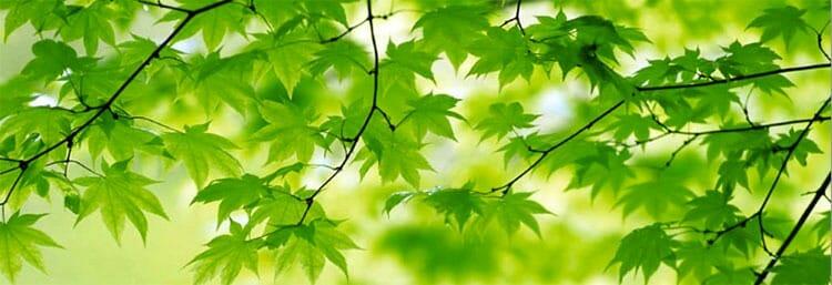 Psicología del color: verde