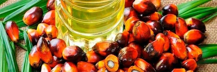 aceite de palma no es tan malo