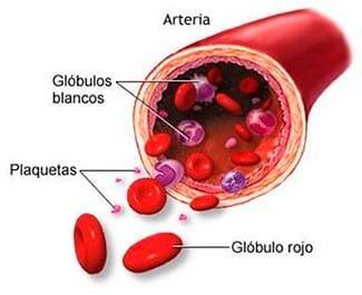Plaquetas sanguíneas