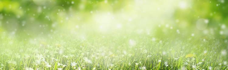 Tipos de alergias al polen