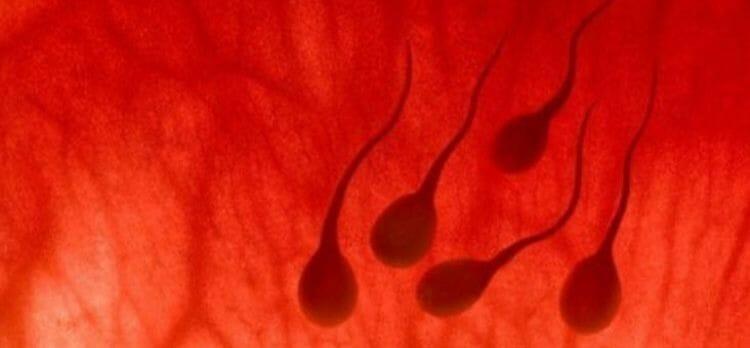 Causas de la sangre en el semen
