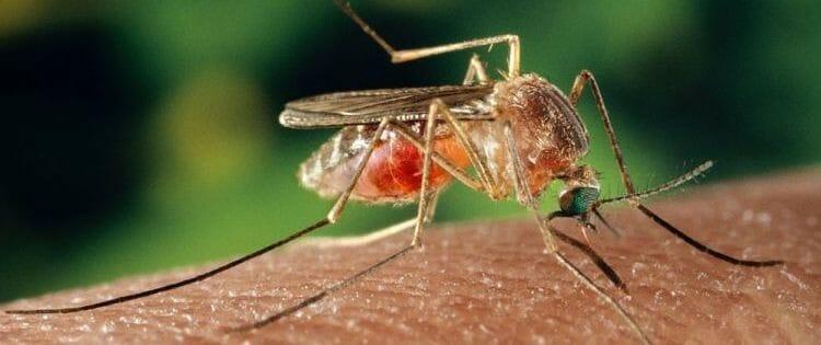 Prevenir picaduras insectos