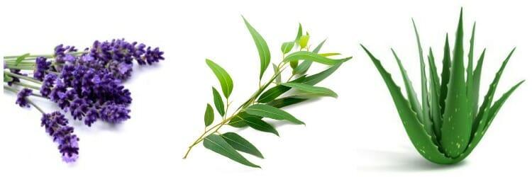 Mejores plantas medicinales - Las más eficaces