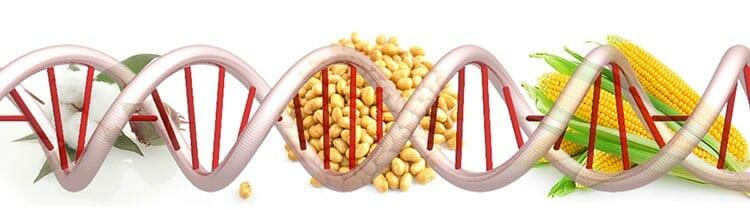 Genes modificados en alimentos