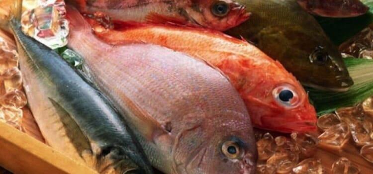El pescado, un tipo de carne