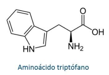 Aminoácido esencial Triptófano