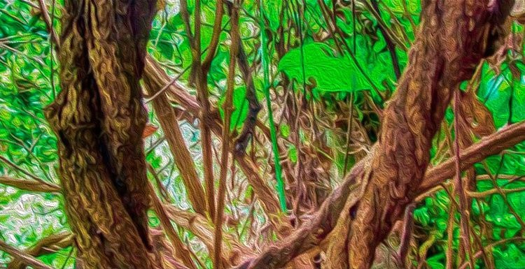 Efectos secundarios de la ayahuasca