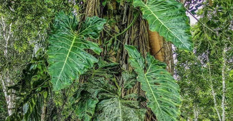 Experiencias con la ayahuasca
