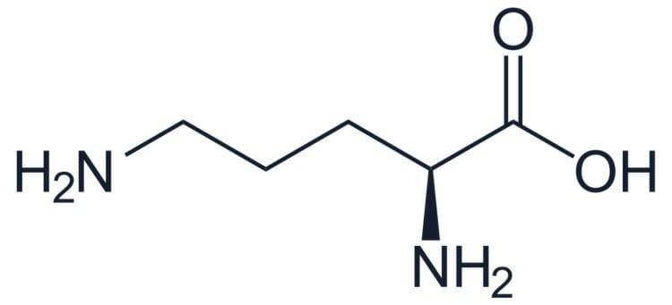 Formulación química de la ornitina