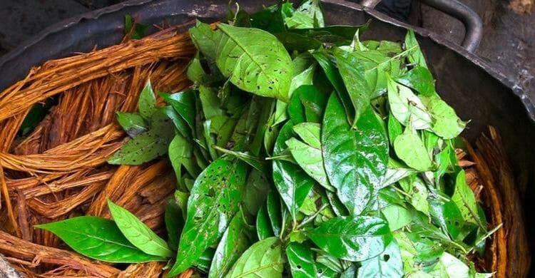 Qué efecto tiene la ayahuasca