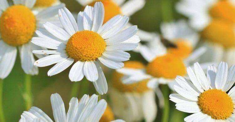 15 remedios naturales para los gases