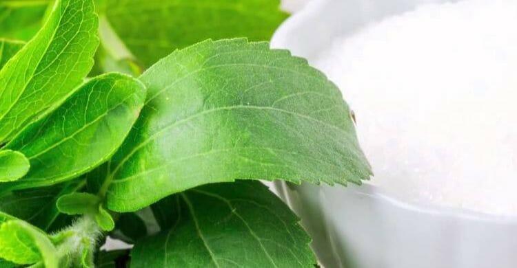 Stevia natural en casa