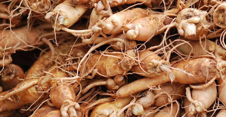 Ginseng: contraindicaciones y efectos secundarios
