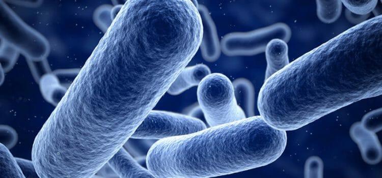 Bacterias de la pielonefritis