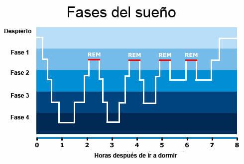 Fases y ciclos del sueño