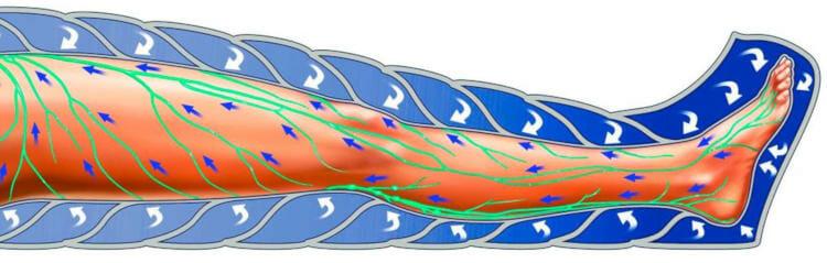 Mejora el sistema circulatorio