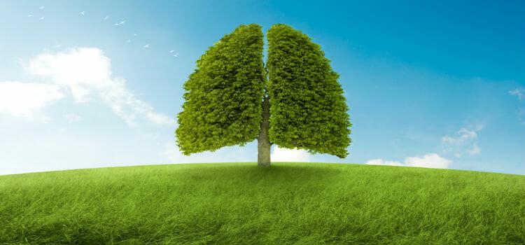El Transporte de oxígeno