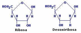 Moléculas de carbohidratos