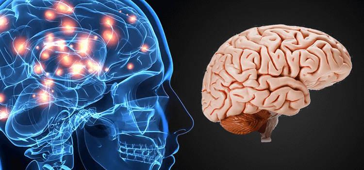 Dopamina y cerebro