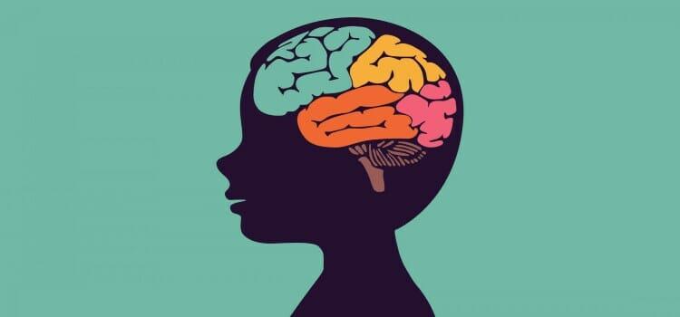 Desarrollo del cerebro